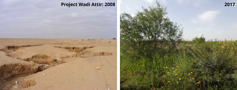 Ecosystem Restoration Before and After (1)