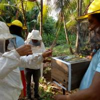 Pollinating the Amazon's Consciousness On Beekeeping